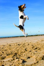 jumping dog on the beach