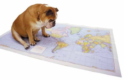 Planning his next pet vacation.
