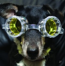 pooch with goggles