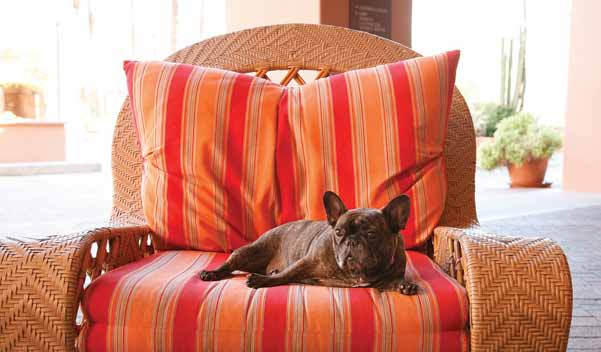 Tips On How to Create A Pet-Friendly Home!