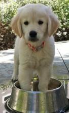 puppy dog bowl cute funny