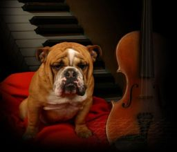 dog symphony violin piano cello