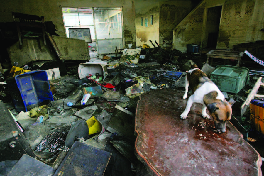 Dallas – Fort Worth, Texas Hit By Major Tornadoes! How To Protect Your Pet During A Disaster