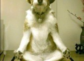 OMM Yoga or Doga anyone?