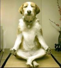 OMM Yoga or Doga anyone?