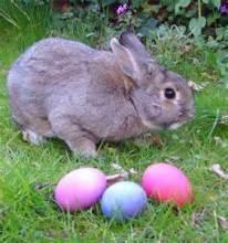 easter bunny cute eggs