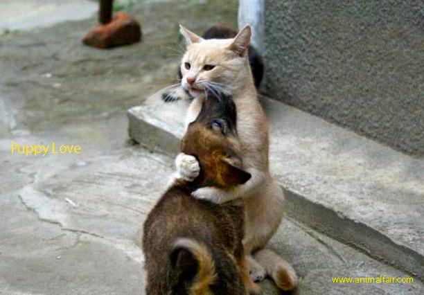 http://animalfair.com/wp-content/uploads/2012/04/catdoghug.jpg