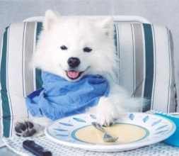 cute dog eating food