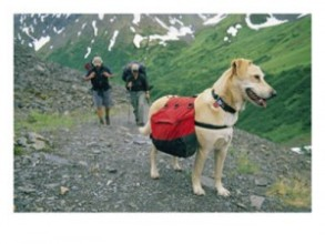 dog-hike-300x225
