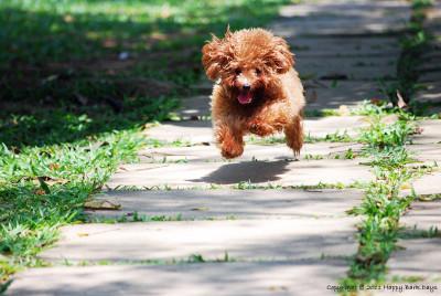 dog-run-feb-15-2011-03