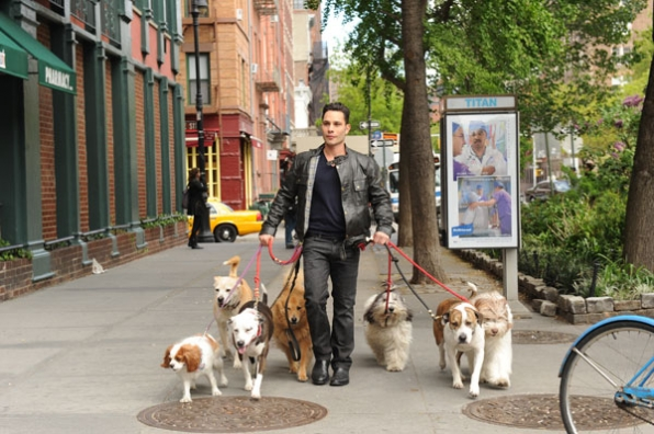 CBS Premiers Dogs In The City Tonight!