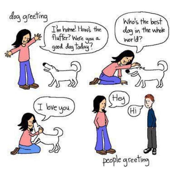 Dog greeting vs people greeting funny animal fair