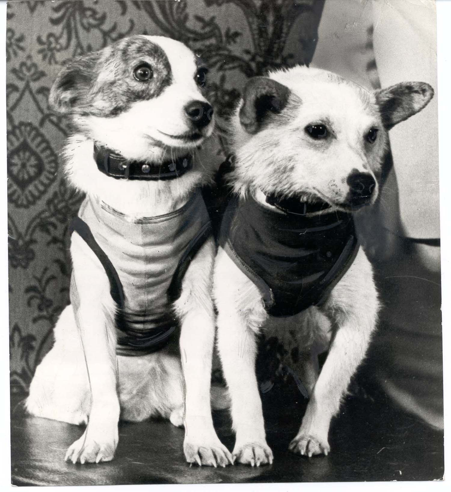 Dogs in Space!