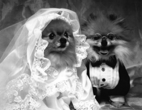 Dog weddings are on the rise, and not just in Hollywood!