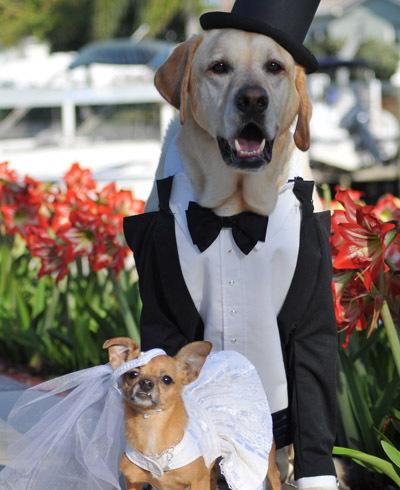 5 More Days! Groom Needed – Pet Wedding of the Century!