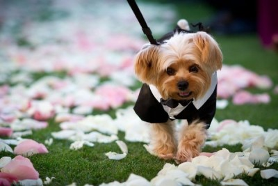 dogs_in_wedding_23jpg