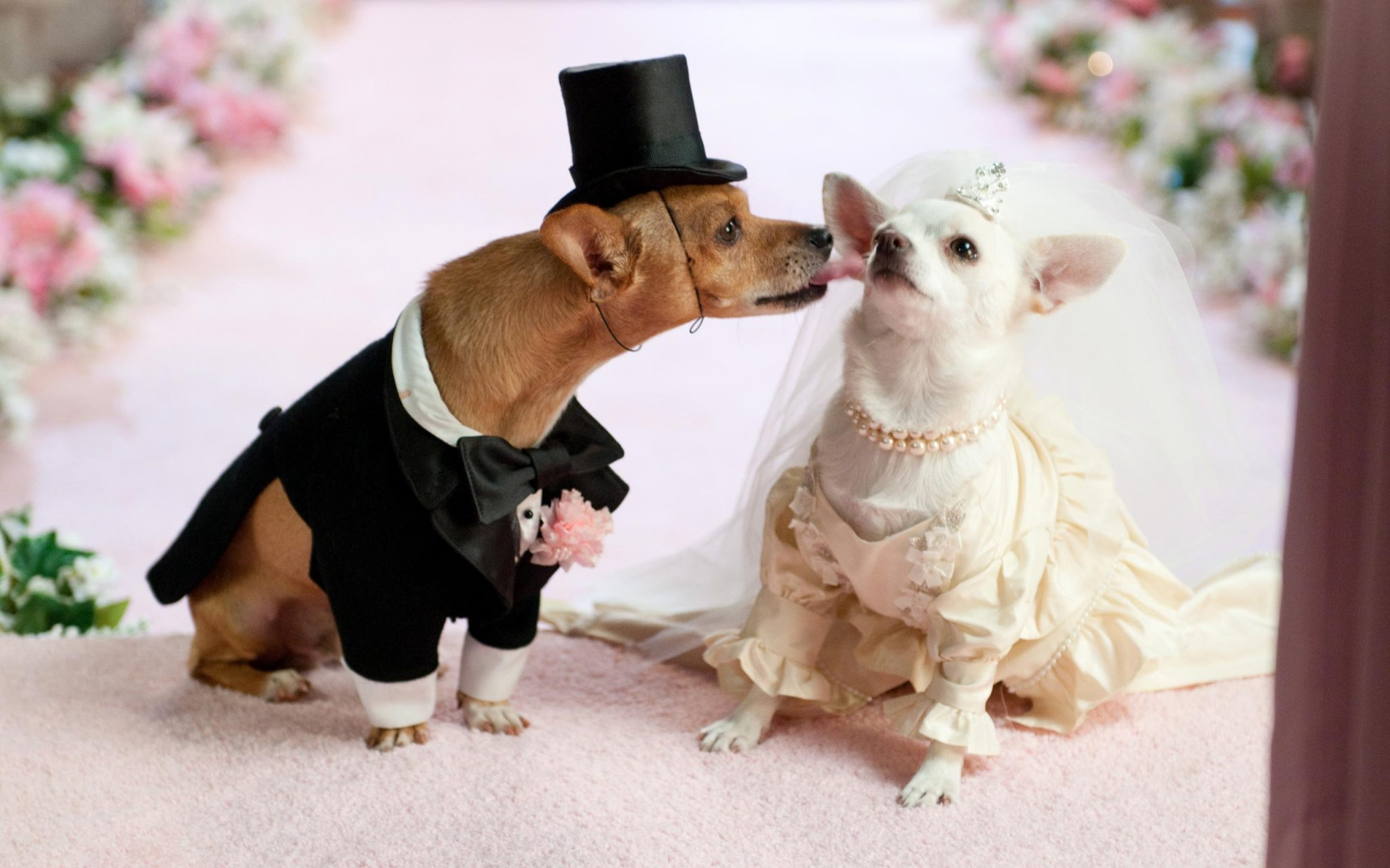 Animal wedding pictures