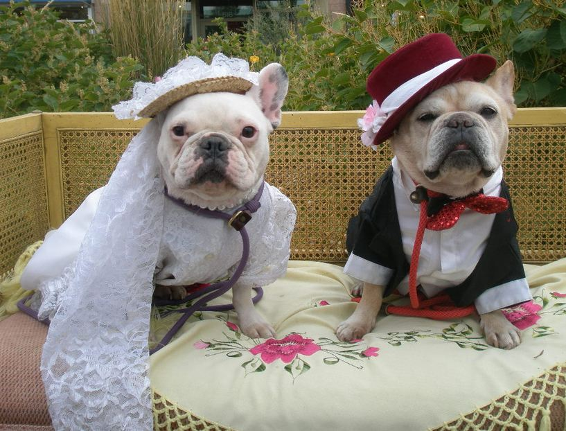 Wedding Dresses For Dogs Animal Fair