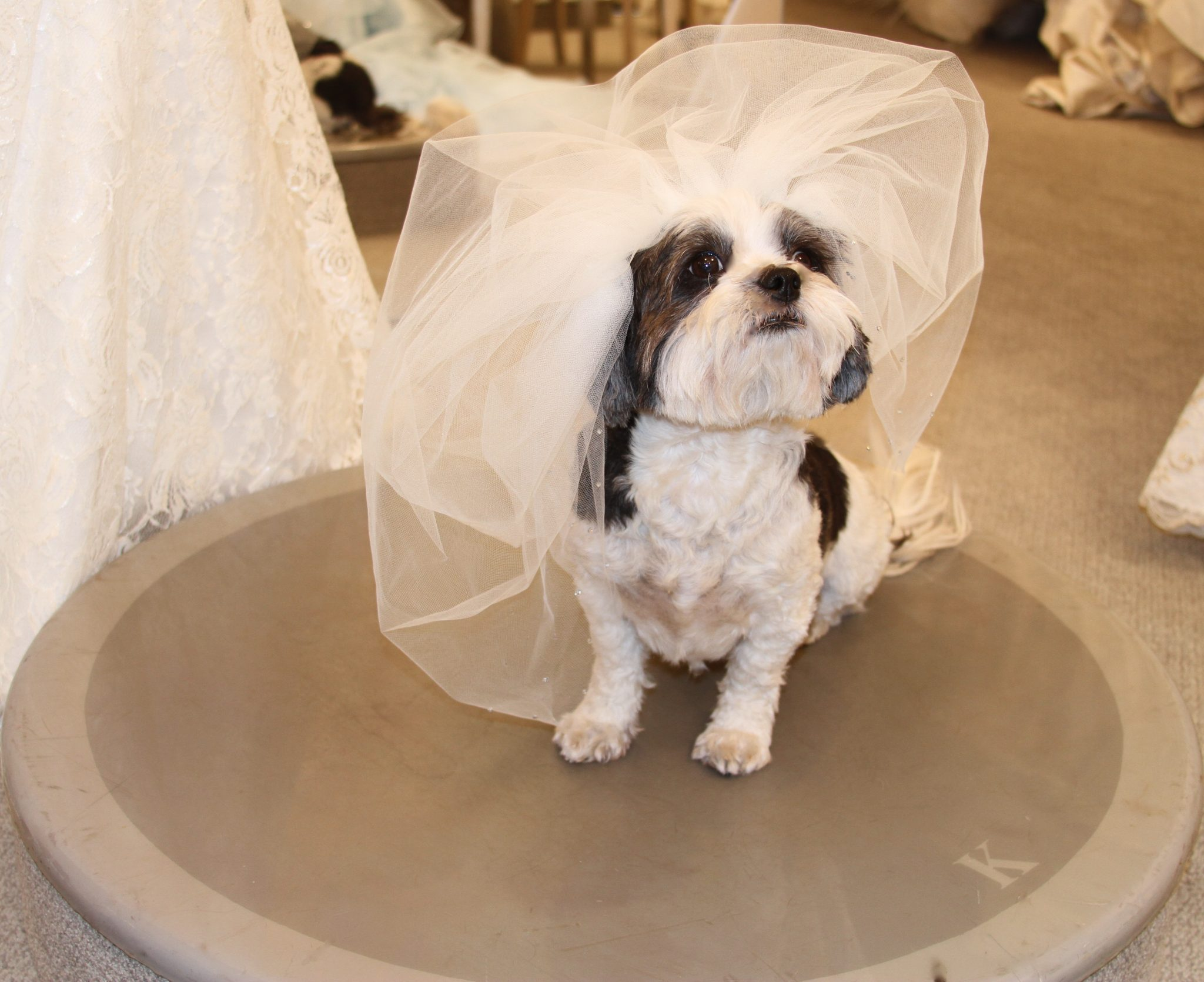 Tips on including your pets in your wedding march animal fair life is far too important a thing ever to talk seriously about oscar wilde ombrellifo Choice Image