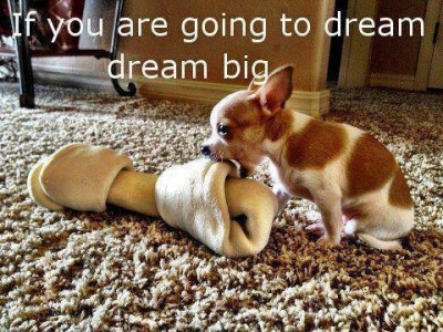 big dog little dof27_4461759148577_2071879931_n