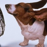 Heatwave! How to Make the Summer Sun Less Ruff On Your Pets