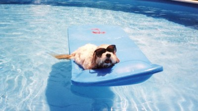 dog-and-pool