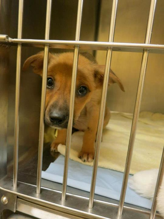 Show Some Puppy Love and Help 'Bobbi & the Strays' Recover from Sandy!