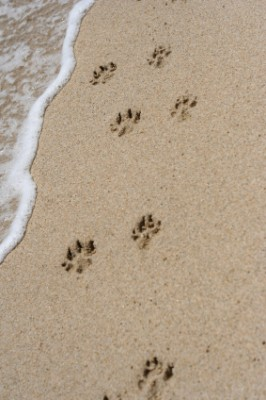 Dog-Footprints-image