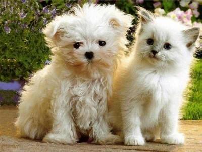 cute-animals141