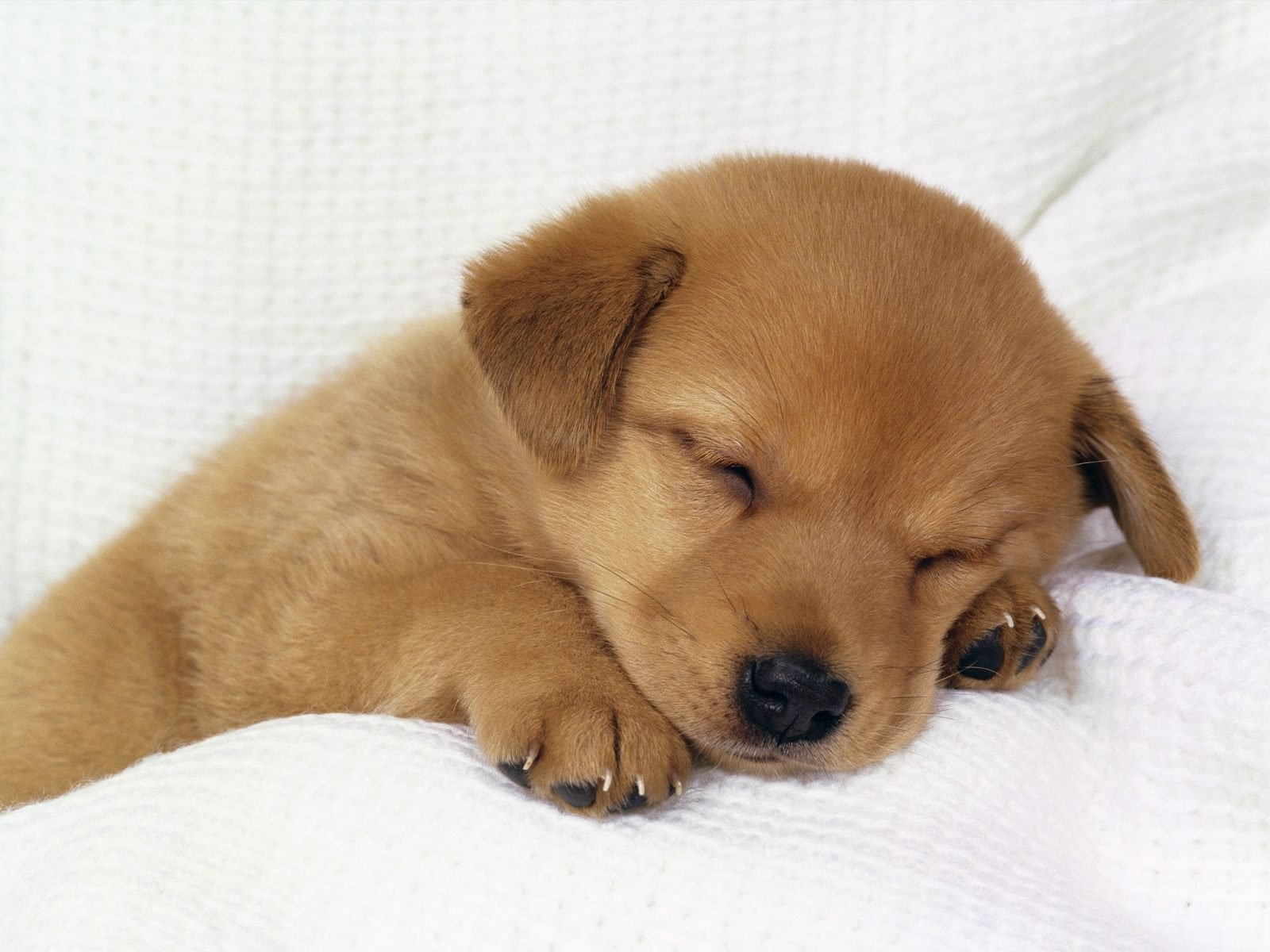 Cute baby dog sleeping 1600×1200