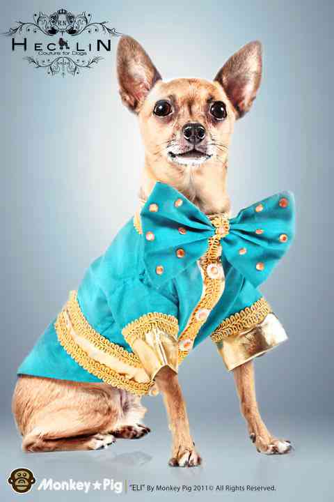 In Honor of Fashion Week! Designer Roberto Negrin's Couture Has Gone To The Canines!