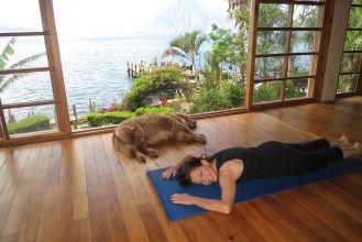 yoga dog doga