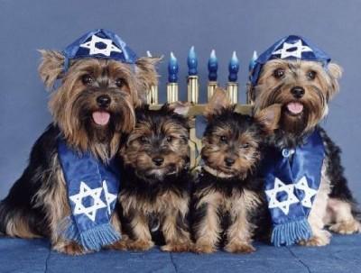 jewish_dogs