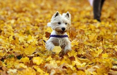 autumn-dog_1010253i