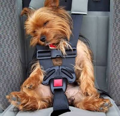 dog-sleeping-in-car