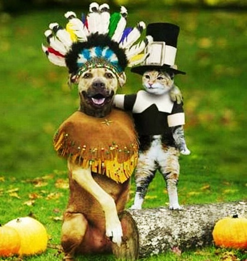 Funny Small Dog Halloween Costumes Funny-dog-costumes-9
