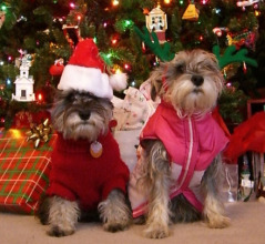 Cute-small-dogs-as-Christmas-Santa-and-Elf