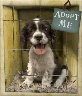 Adopt a rescue dog