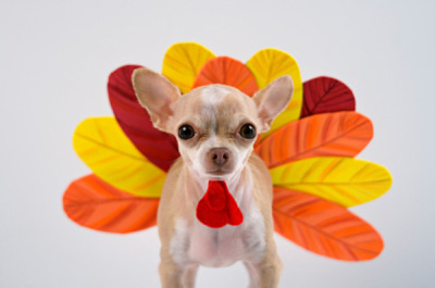 Thanksgiving turkey dog