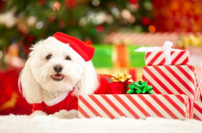 Spread some puppy love this Pawliday Season and donate a toy for a homeless animal!