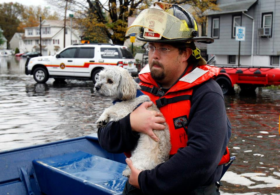 Prayers To All Affected By The Floods In Colorado – Natural Disaster TIps To Protect Your Pets!
