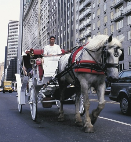 The NYC Horse Drawn Carriage Dogfight Debate Continues …