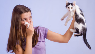Cat-Choo  & Dog Bless! Living With Allergies Has Just Become Easier