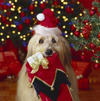 Tips to keep your furry friends safe during the Holidays!