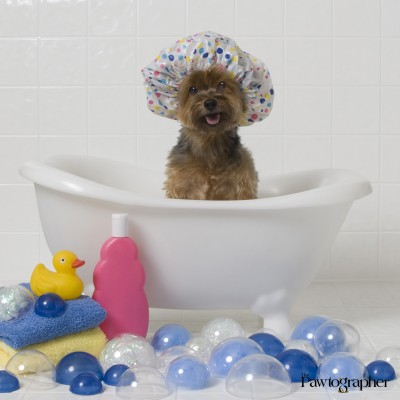 The Pawtographer Bath Tub Dog