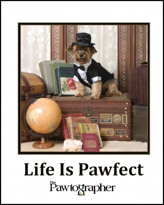 The Pawtographer's Life is Pawfect book combines 50 adorable pet portraits and witty wisdom for the soul.
