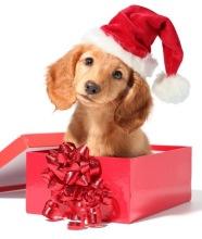 christmas-dog-dogs-33144122-650-765