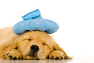 Dog with Flu - sick