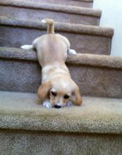 Cute Dog Stair Case