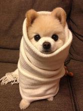 dog cold flu winter
